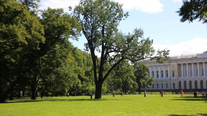 В Петербурге начали высаживать молодые деревья