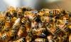 На севере Петербурга рой пчел облюбовал детскую площадку
