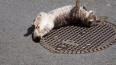 """""""Леноблводоканал"""" продолжает реконструкцию канализационных ..."""