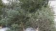 В Петербурге открыли пункты приема прошлогодних елок