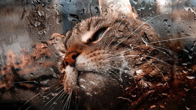 Жителей Ленобласти предупреждают о грозах в понедельник
