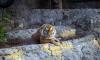 В День защиты детей в Ленинградский зоопарк школьников пропустят бесплатно