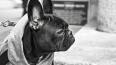 Пенсионерка скончалась во время прогулки с собакой ...