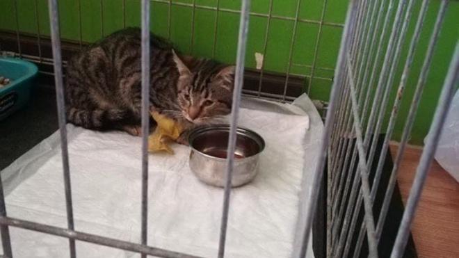 Петербургские волонтеры вызволили котенка из фонаря-ловушки