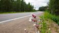 Дорожники Ленобласти завершили ремонт участка трассы ...