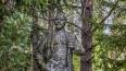 В Красном Селе вандалы залили памятник Ленину красной ...
