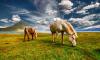 Двоих фермеров оштрафовала за нарушения при содержании животных