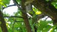 Жители Приморского района заметили потерявшуюся игуану