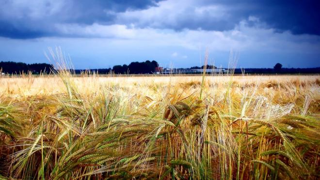 В субботу в Ленинградской области ожидается усиление ветра