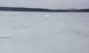 В Башкирию прилетели лебеди