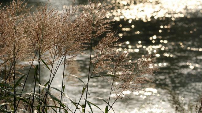 Во вторник в Ленобласти ожидается сильный ветер и до +6 градусов