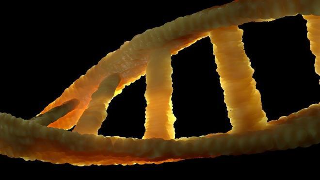 У неандертальцев была Y-хромосома от Homo sapiens