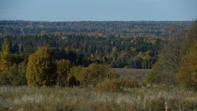 Объем производства продукции лесного комплекса за полгода составил 40 млрд рублей