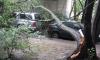 На Серебристом бульваре на машины упало дерево