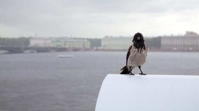 Небольшие осадки и похолодание ожидаются в Петербурге 27 ноября