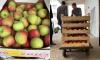 Республика Крым подарила детям Ленобласти на День рождения региона партию свежих фруктов