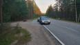 У поселка Саперный водитель сбил лосиху