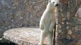Сотрудники зоопарка попросили посетителей не подвергать ...