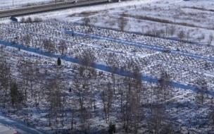 Петербуржцам запрещено прощание с покойными