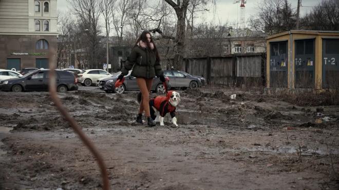 На Парнасе бойцовская собака загрызла йоркширского терьера