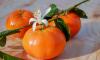 В Морском порту Петербурга контроль не прошли мухи, спрятавшиеся во фруктах