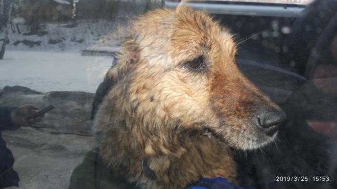 В Выборге спасатели вызволили собаку из ледяного плена бухты Радуга