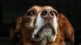 В Петербурге предлагают отпускать бродячих собак после с...