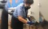 В Пулково проверили более двух тысяч кошек и собак за три месяца