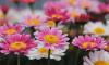 Ботанический сад украсили ковры первоцветов