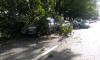 В Адмиралтейском районе из-за сильного ветра дерево придавило иномарку