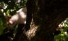 В Ленобласти кот прятался от собак на дереве целую неделю