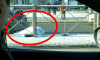 За январь на дорогах Петербурга сбили 187 пешеходов