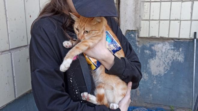 Спасатели вызволили кошку, застрявшую между домами в Тихвине