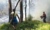 В Выборге тушат сильный лесной пожар