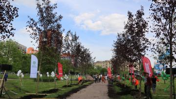 В Пулковском парке заложена Аллея Бизнеса из 25 краснолистных кленов