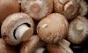 Под Петербургом будут выращивать грибы