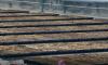 Полиция задержала петербуржца, который выбрасывал химические отходы на дачном участке