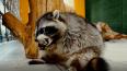 """В """"Питерлэнде"""" контактный зоопарк кормил животных ..."""