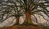 Под Петербургом нашли висящий на дереве труп