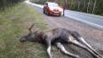 На трассе Скандинавия петербуржцы заметили умершего ...