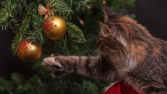 Эксперты дали советы по выбору новогодней ёлки