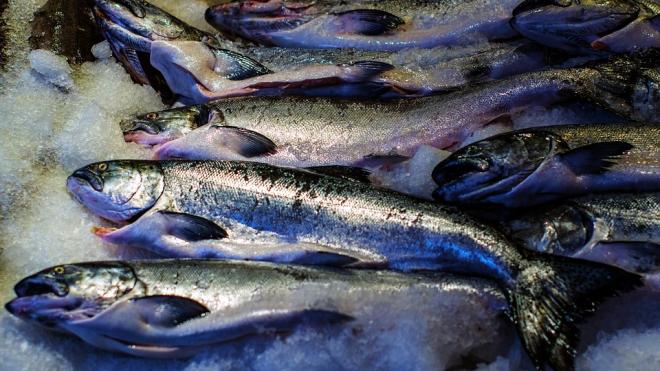 Россельхознадзор запретил ввоз в порт Петербурга неизвестной рыбы