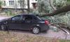 Фото: на Ветеранов дерево погнуло машину и выбило стекла