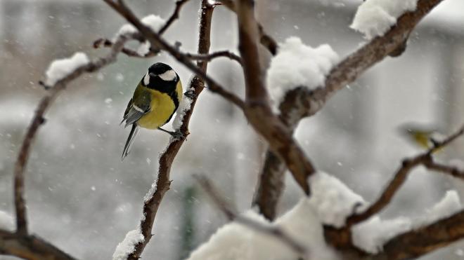 В воскресенье по Ленобласти пройдет мокрый снег
