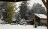 Петербуржцы: в Ленобласти выпал снег
