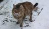 В Петербурге бабушка отправилась кормить котов, но сосулька убила ее
