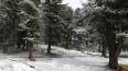 Жители республики Алтай уже лепят снеговиков