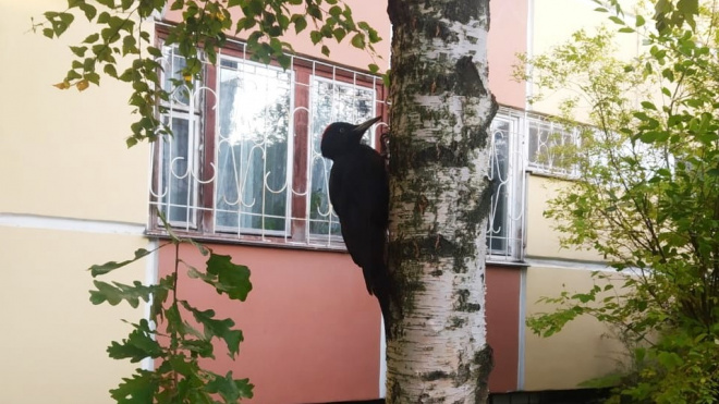 Петербуржцам пригрозили штрафом за беспокойство птиц