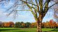 Губернатор Ленобласти: парк Оккервиль застраивать ...
