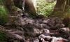 В Ленобласти обнаружили пенсионера, который провалился в яму